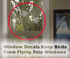 Bird Flying Into Window Odds Amp Ends Buy It Now
